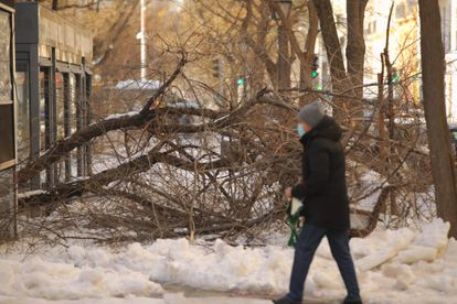 The snow storm has downed many trees in the city of Madrid.