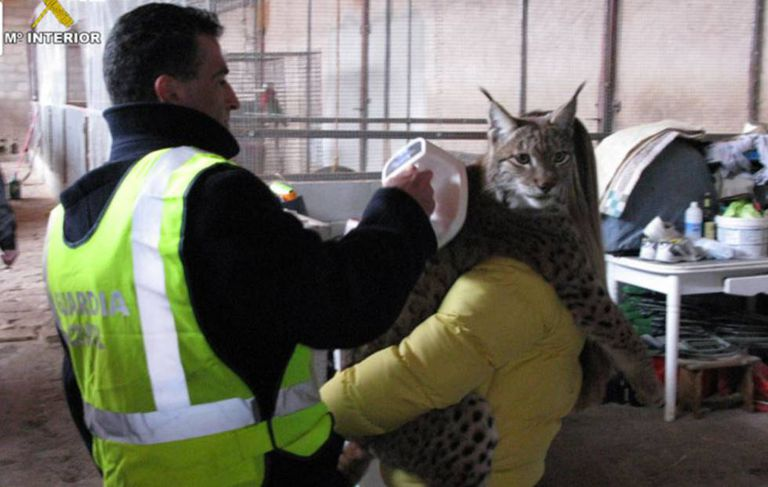 Civil Guard officers rescue an Iberian lynx.