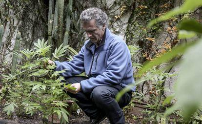 Businessman Eduardo Blasina on a marijuana plantation.