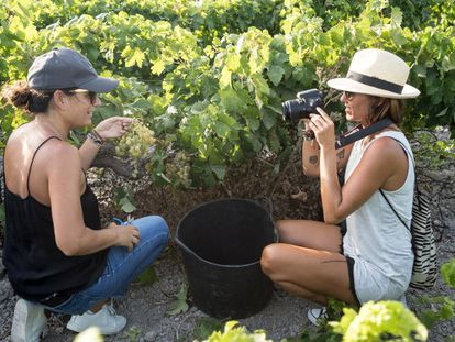 Tourists harvesting grapes at the Spirit Sherry winery.