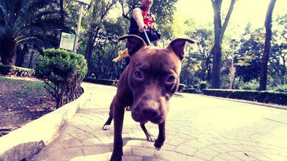 A pet owner walks a dog in Parque México.