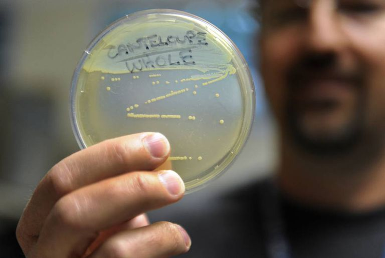 An employee at the Colorado public health department holds up a listeria sample.