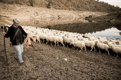 Nieves leads her 400 sheep to drink at a local reservoir because of a lack of water at her farm.