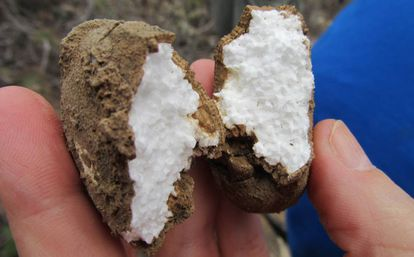 A polystyrene ball found on the site, which helped to date the phenomenon.