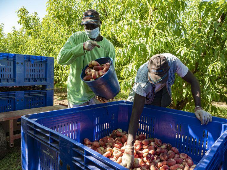 Seasonal workers in Segriá on July 6.
