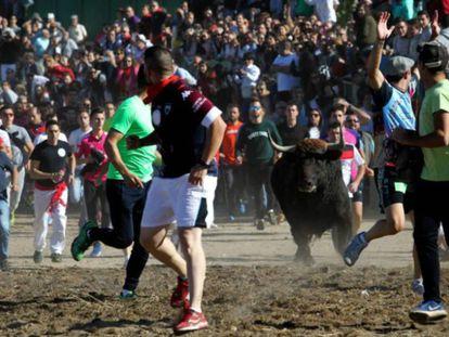 The Toro de la Vega festival in 2017.