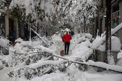 Fuencarral street in Madrid, where trees and Christmas lights collapsed under the weight of the falling snow.