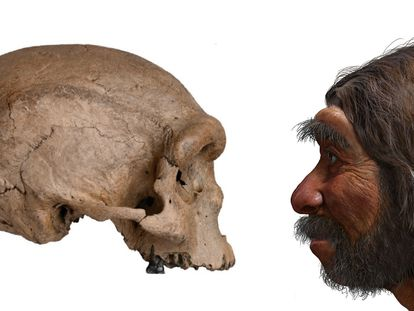 A 'Homo longi' skull (l). A reconstruction of his possible appearance (r).