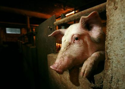 Spain is the world's third-largest pork exporter.