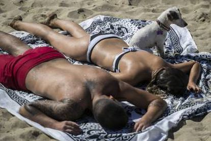 Almost one in every two Spanish households has a pet.