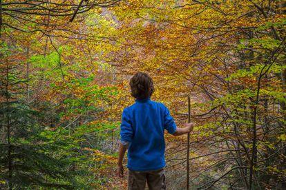 A forest near Cola de Caballo waterfall in Ordesa (Huesca).