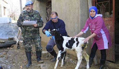 Pedro Lorenzo and Librado Carrasco with a calf.