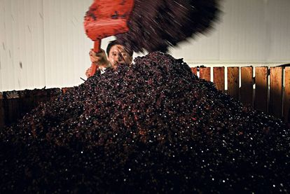 A worker at Juan Gil winery in Murcia, in the Jumilla appellation of origin.