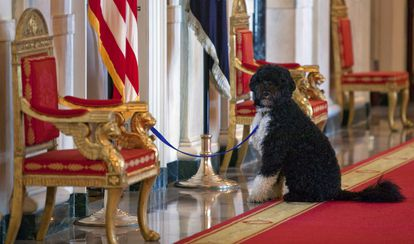 Bo, the Obamas' dog, in a 2010 photo taken at the White House.