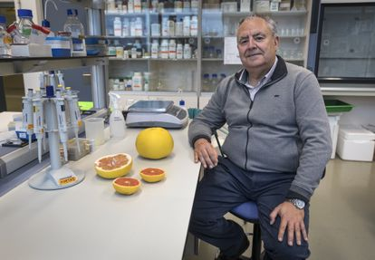 Manuel Talón in his laboratory at the Valencian Institute of Agricultural Research.