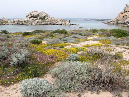 Mediterranean coast of the Lavezzi Islands, Corsica.