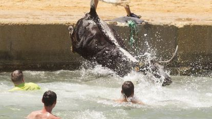 A bull ends up in the sea during Dénia's local summer festivities.