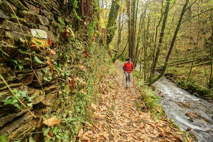 Hiking path in the Los Oscos reserve in Asturias.
