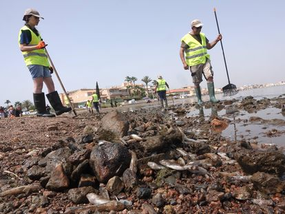 Dead fish and shrimp that washed up dead on the shores of Mar Menor in Murcia.