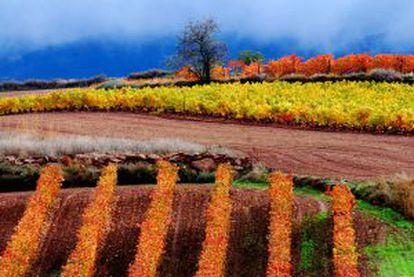 Vineyards in Cordovín, in La Rioja.