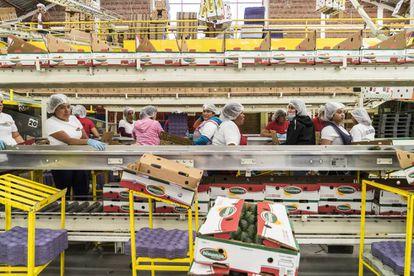 Workers in the packaging company La Bonanza, in Uruapan.