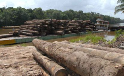 Trees felled in the Amazon region.