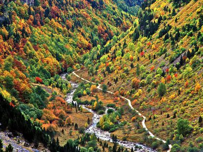 The charm of the Pyrenees' most spectacular valley lies in this explosion of color that skirts these mountains covered in oak, ash, maple, hazel and rowan trees straddling the River Arazas.