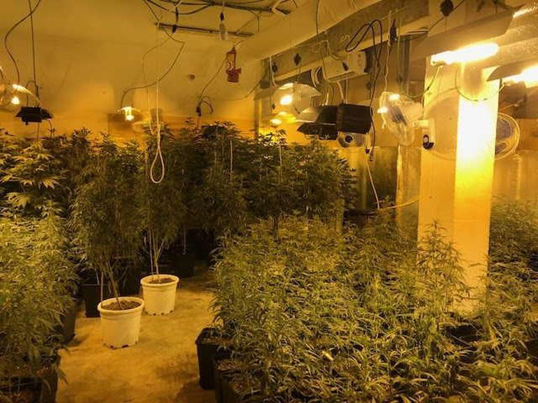 Police seized 461 cannabis plants in the Barcelona neighborhood of Carmel in July.