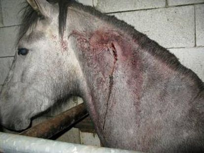 Microchips were extracted without any thought for animal welfare.