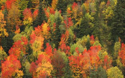 Autumn colors in the Valley of Ordesa, in the Aragón region.