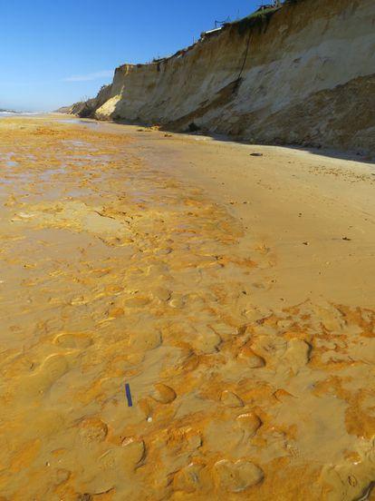 Tracks made by straight-tusked elephants 106,000 years ago in Matalascañas (Huelva).