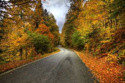 Fall landscape in Selva de Irati, in Navarre.