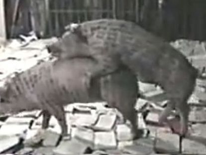 Controversial installations from Chinese artists include a video of two pigs copulating, as well as the use of live reptiles and insects
