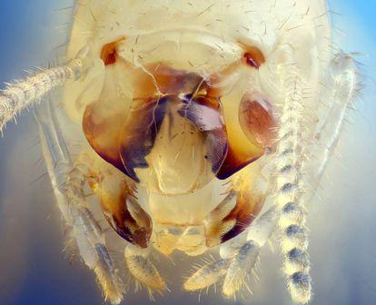 Close up of a termite.