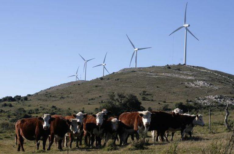 Windmills in Sierra de Caracoles, Uruguay.