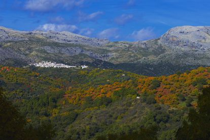 In Sierra de las Nieves, a natural enclave in southwest Málaga that became Spain's 16th national park this past summer, it is important to listen as much as it is to look if you go there in the fall. At sunset, visitors can not only enjoy the palette of greens, yellows and browns from the forests of holm oak, cork oak, pine, fir and chestnut, but also hear the bellowing calls of male deer during the rut. The area known as Bosque de Cobre (Copper Forest), which gets its name from the reddish tinge on the leaves of the chestnut trees that cover the mountain range and the neighboring Valley of Genal, contains several well-marked trails. For more information: sierradelasnieves.es and malaga.es