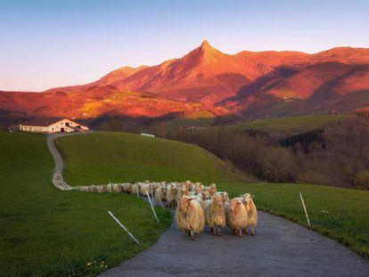 Sheep against the backdrop of Mount Txindoki in the Basque Country.