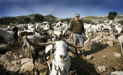 A shepherd with his flock of Blanca Celtibérica goats in Castellón province.