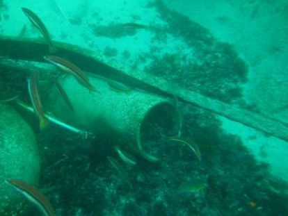 A German sub has been uncovered after years of research, unsuccessful dives and a local tipoff