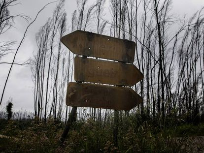 Signs singed by the 2017 wildfires in Portugal.