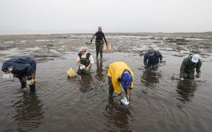 Shellfish harvesters in Carril (Villagarcía de Arousa).