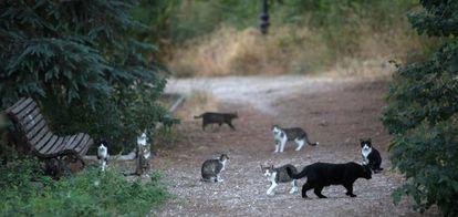 A cat colony in Arturo Soria park.