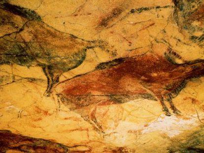 Bison paintings inside Altamira cave.