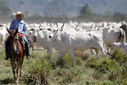A cattle farm in São Félix do Xingu, Pará state.