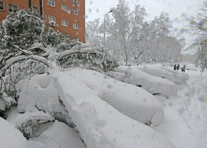 Fallen trees in Madrid on Saturday.
