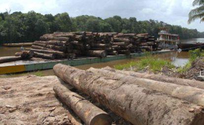 Trees felled in the Amazon region.