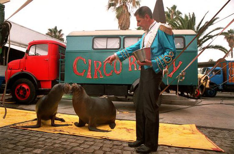 Circus animals will not be able to visit Catalonia should the new law pass.