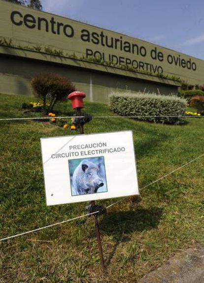 An electric fence to keep boars out of a club in Oviedo.
